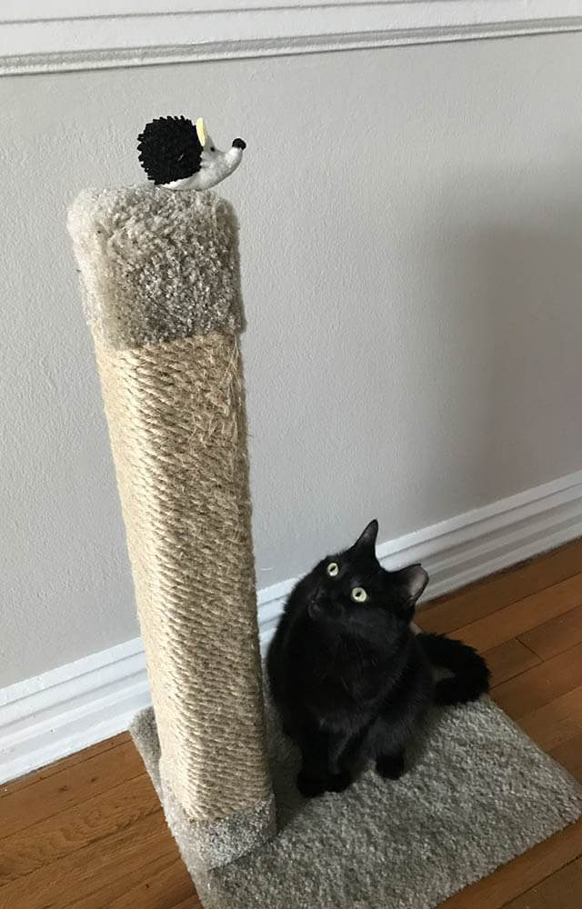 black cat looking up a scratching pole at a toy hedgehog at the top