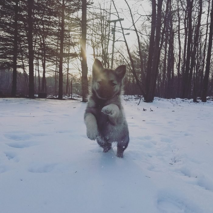 puppy running towards the camera in the snow