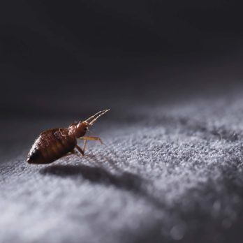 If You Have This Dirty Habit on Vacation, Your Risk for Bed Bugs Goes Way Up
