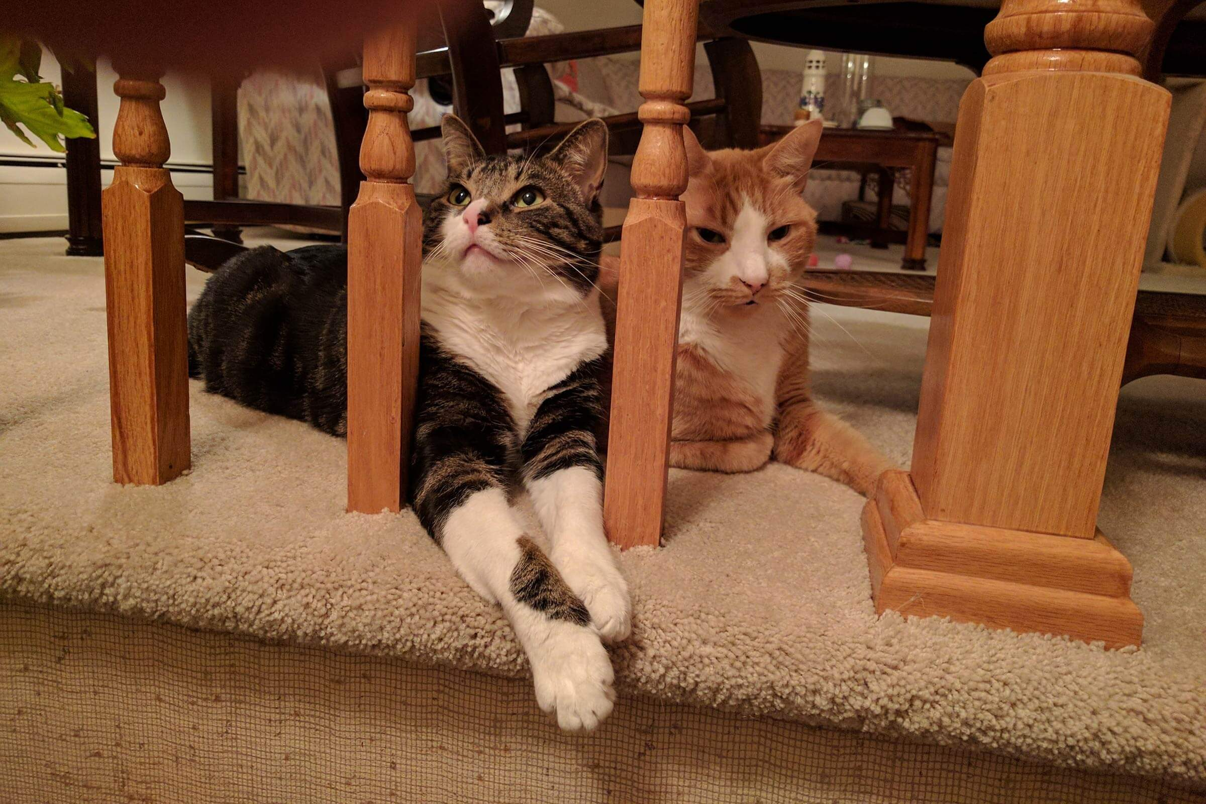 two cats behind the spindles of a bannister