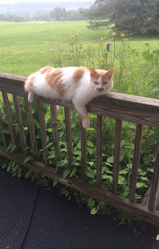 cat laying on the bannister railing of the deck on a foggy day
