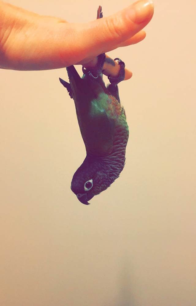 small bird hanging upside down off a person's hand