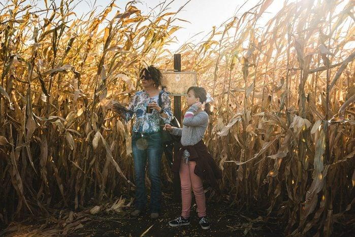 Severs fall festival Corn Maze Challenge
