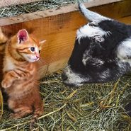 """100 of the Most Adorable Animal Pictures That Will Make You Say """"Awww"""""""