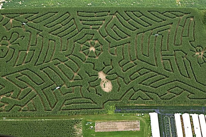 Stoughton Farms Corn Maze