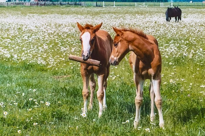 two young horses in a field