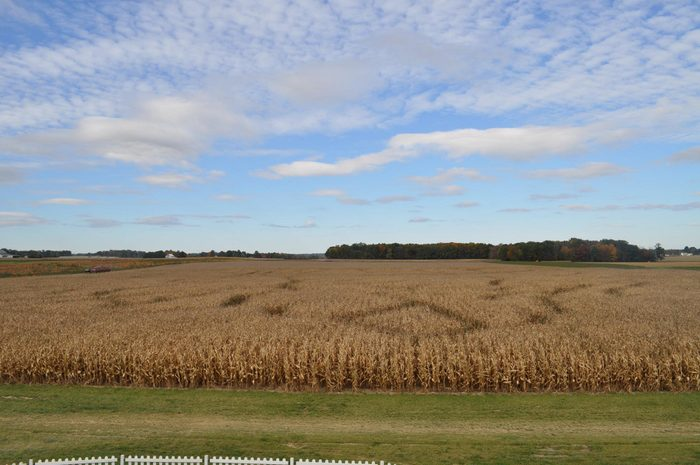 Corn Maze 1Ramseyer Farms, Wooster, Ohio