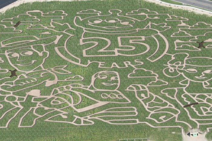 Cornbellys Corn Maze