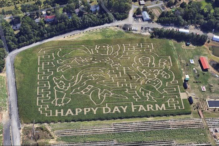 Happy Day Farm Corn Maze
