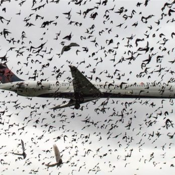 What Happens When a Plane Collides with a Flock of Birds?