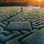 25 Best Corn Mazes in America