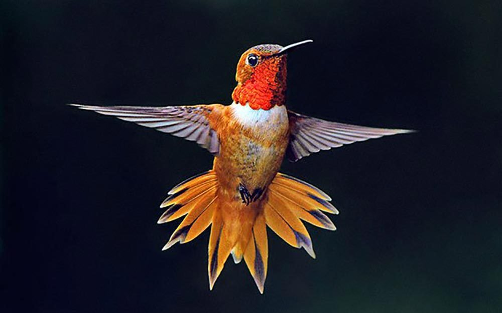 19 Jaw-Dropping Facts About Hummingbirds