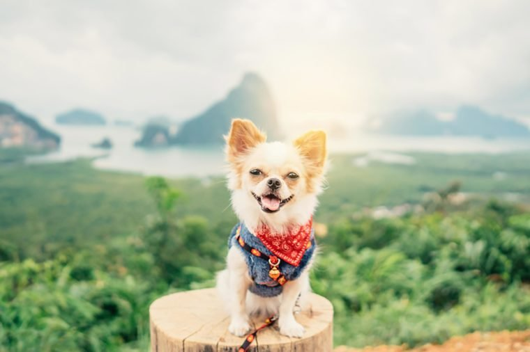 Dog Puns That Will Give You Paws | Reader's Digest