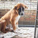 13 Things Shelter Dogs Wish You Knew