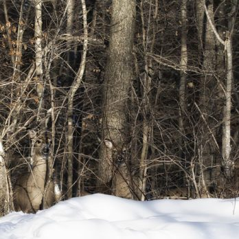 We Bet You Can't Spot the Hidden Soldier Camouflaged in this Photo