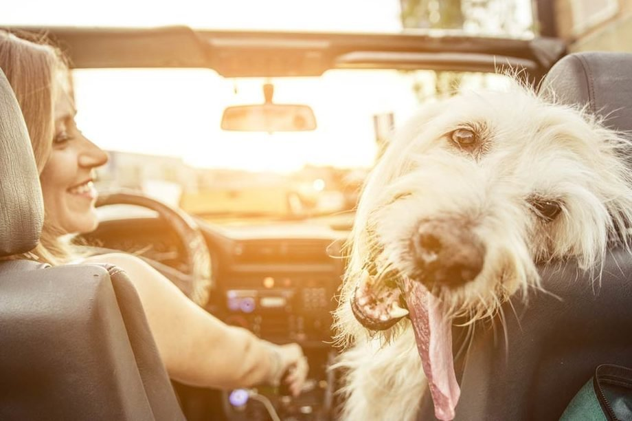 If-You-Live-In-This-Country,-It's-Illegal-to-Drive-With-Your-Pet-in-the-Car_331376426_oneinchpunch-ft