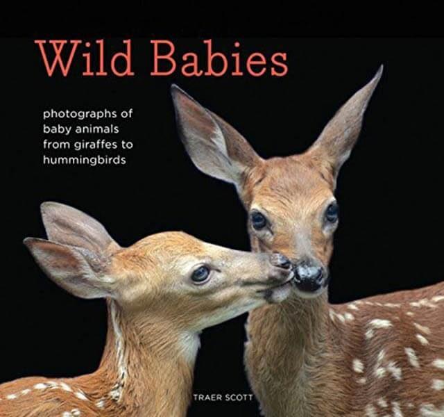 Photos-of-the-Cutest-Wildlife-Babies-Courtesy-TRAER-SCOTT