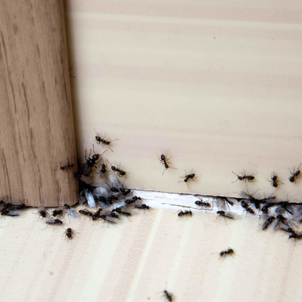 How to Get Rid of Ants: 13 Simple Solutions | Reader\'s Digest