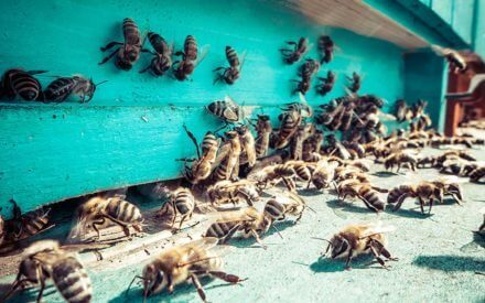 this is where all the honeybees hide in the winter months