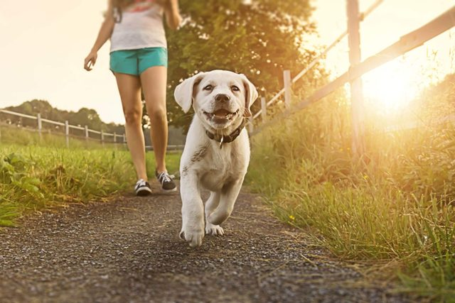 This-Is-Why-Your-Dog-Is-Helping-You-Live-Longer,-According-to-Science_480616399_manushot