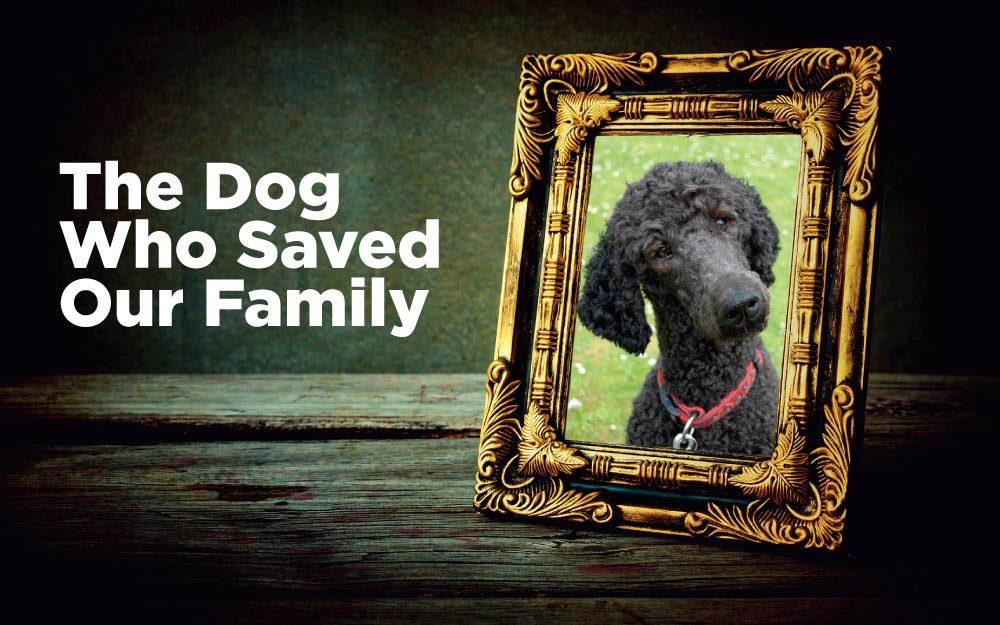 AOL_LWL_Dog-Saved-Family_US171299