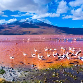 7 Naturally Beautiful Pink Lakes from Around the World