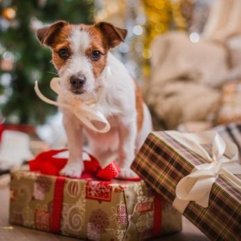 How to Relieve Your Pet's Separation Anxiety During the Holidays