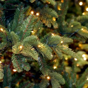 10 Creative Ways to Recycle Your Christmas Tree