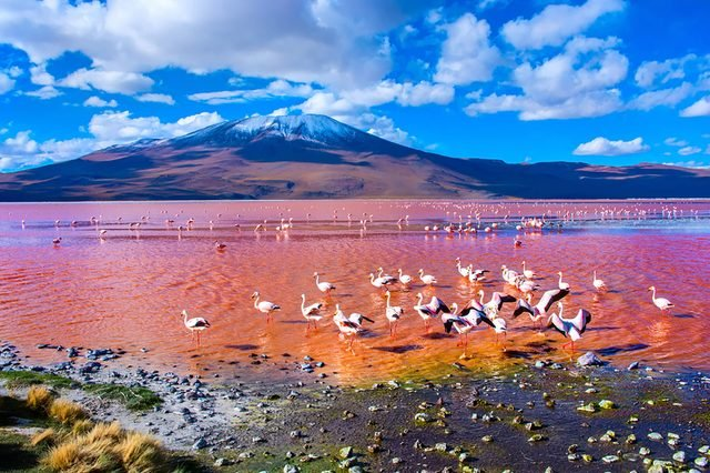 Pink-lakes