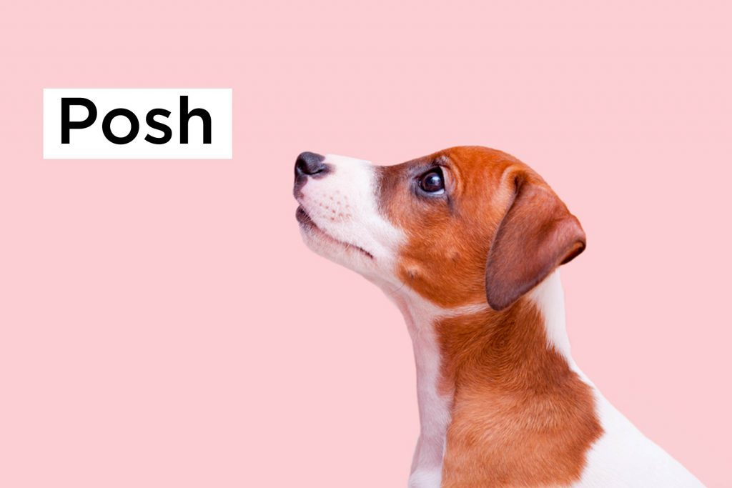 Arf These Are The Top Dog Names Of