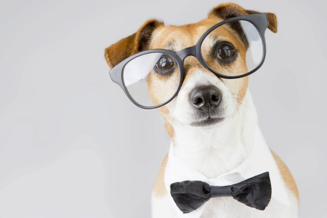 Dogs-Are-More-Intelligent-Than-Cats,-According-to-Science_237549682_Kalamurzing