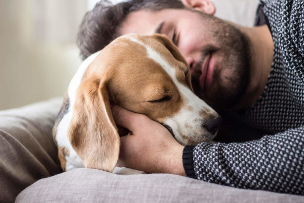 Your Dog Is Showing You Affection If He Did These 7 Things