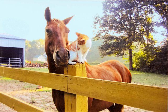 Horse-Cat