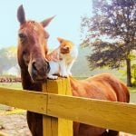 The Sweet Friendship Between This Cat and Horse Will Warm Your Heart