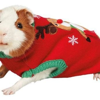 These Guinea Pig Costumes Exist as an Early Christmas Gift for Your Soul