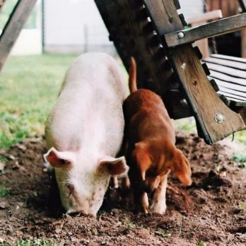 13 Adorable Pictures of Farm Life That Will Make You Want to Move to One