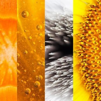 Can You Identify Everyday Objects By These Close-Up Pictures?
