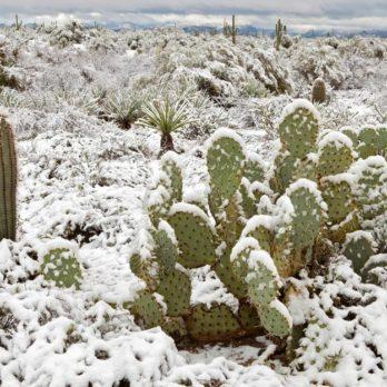 8 Surprising Places You'd Never Believe It's Snowed