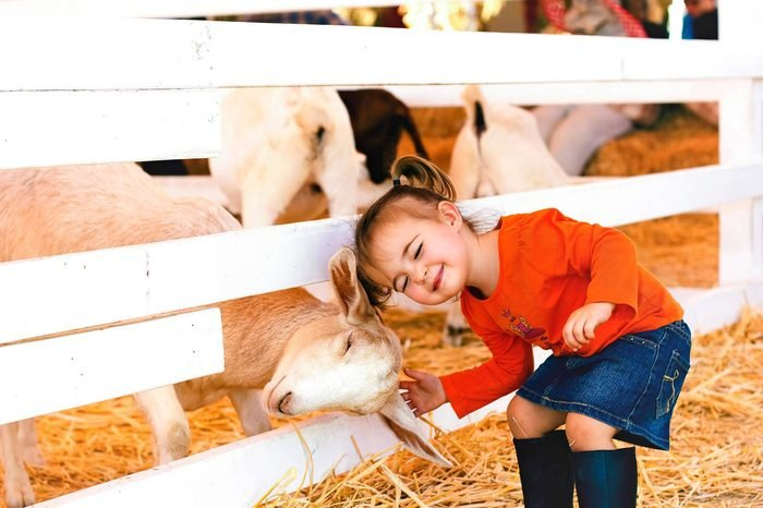 little-girl-and-goat