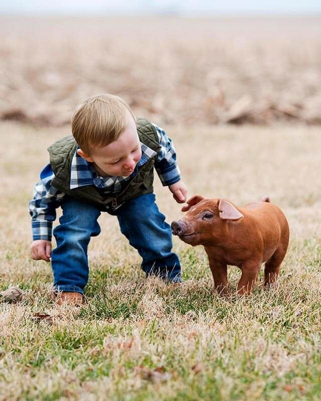 Little-boy-and-pig