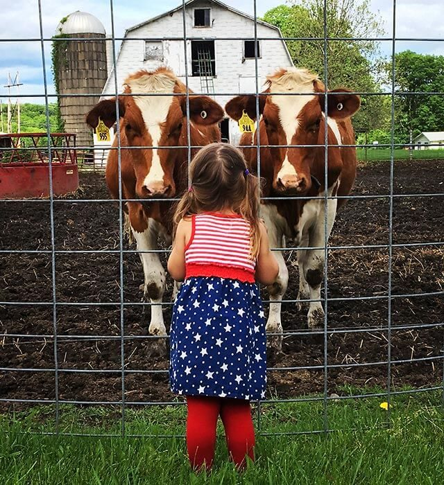 Little-girl-and-cows