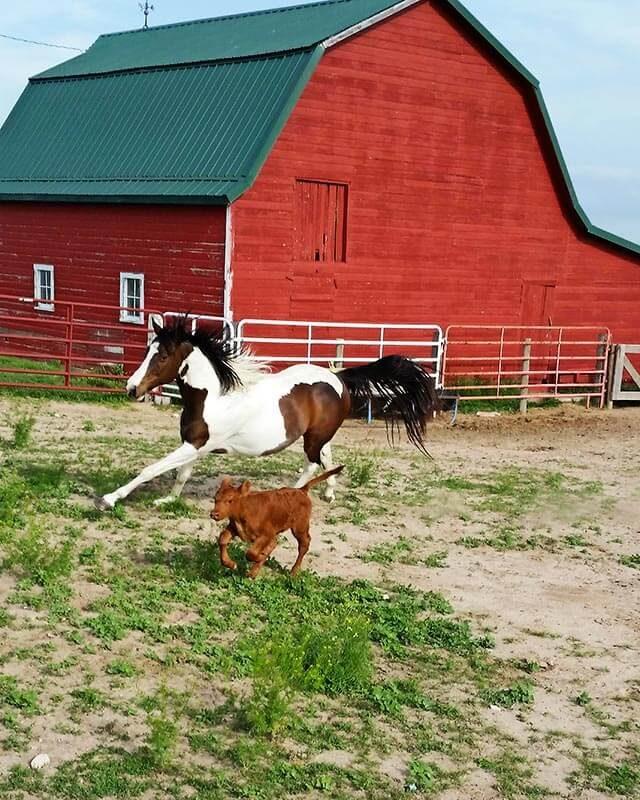 Farm Ranch Living Courtesy Karen Evans