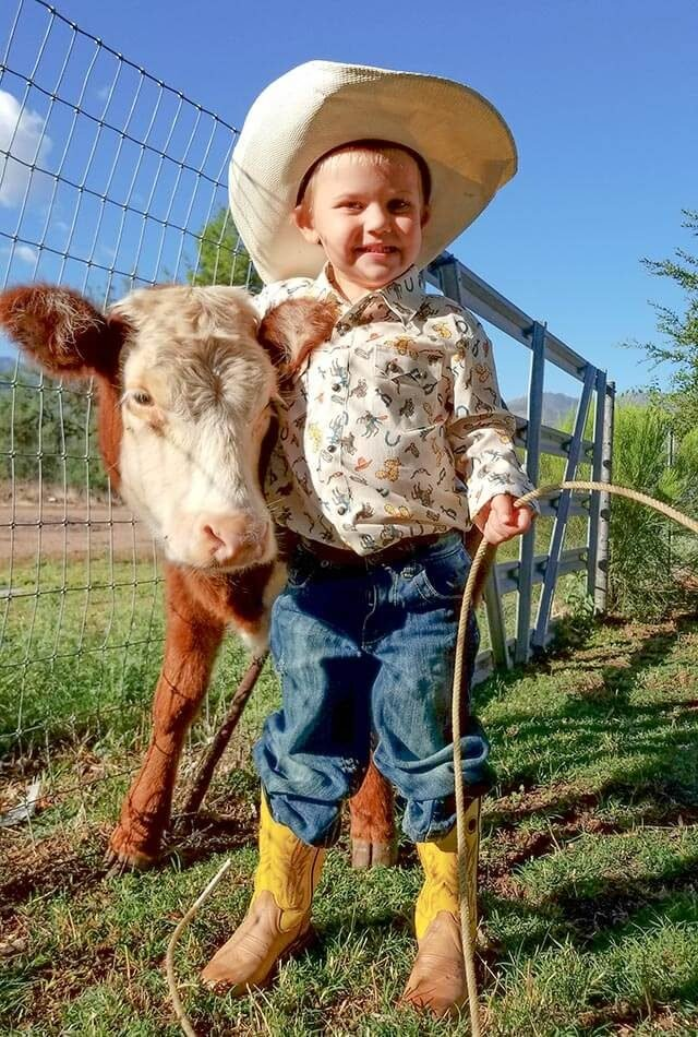 Little-boy-baby-cow