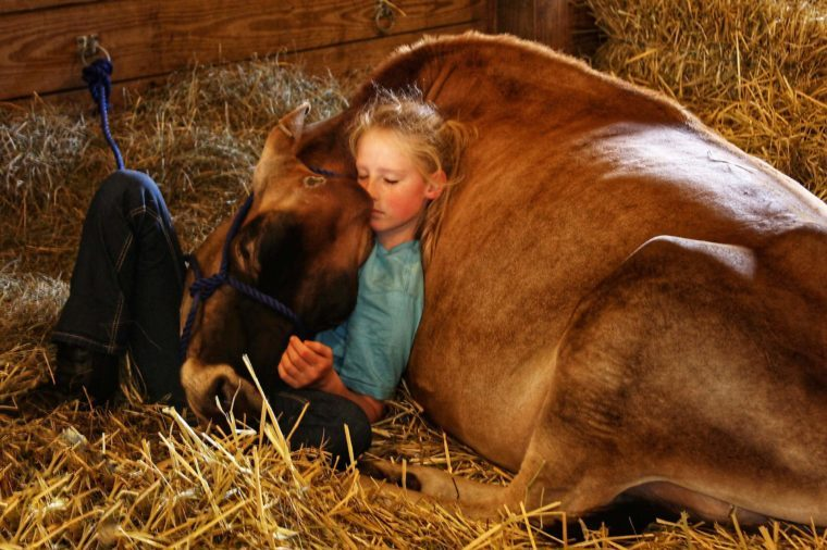 Little-girl-and-cow