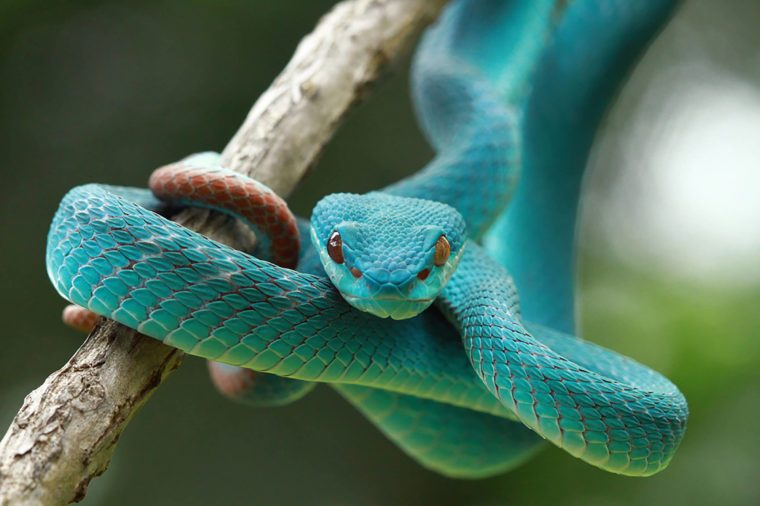 Image result for pictures of last snakes of ireland