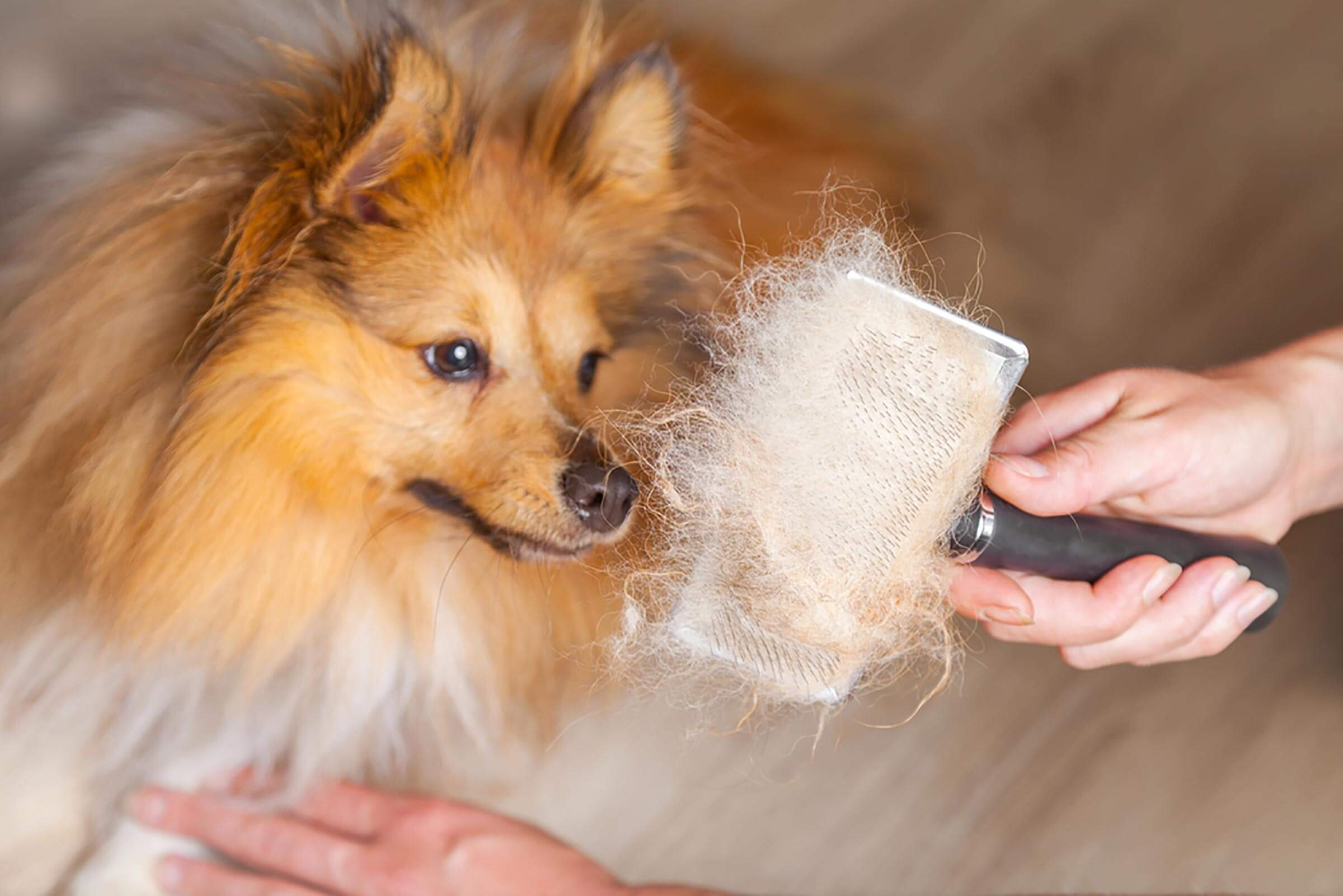 pet-hair