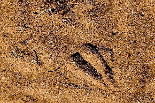 Giraffe-footprint