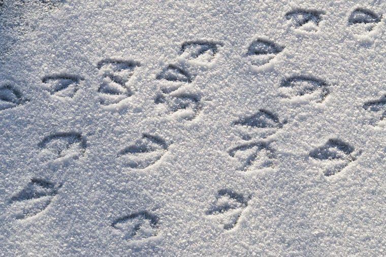 Duck-footprints