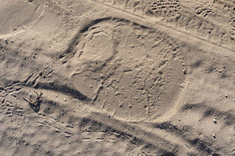 Elephant-footprints