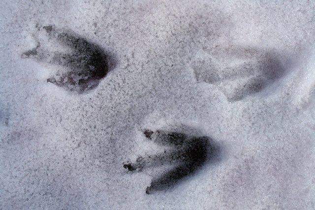Penguin-footprints